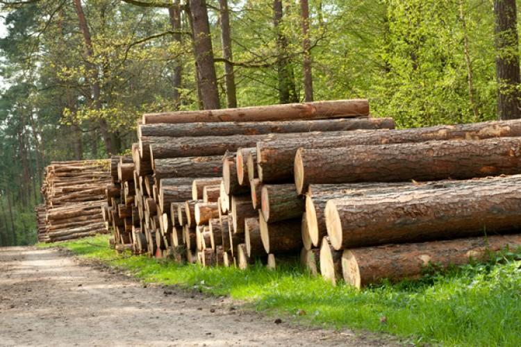 Pflieger Immobilien Holzhandel